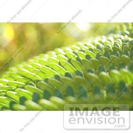 #36768 Stock Photo of a Closeup Of Sunlight Bouncing Off Of Green Fern Leaves by Jester Arts
