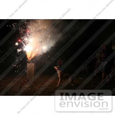 #399 Image of a Pit Bull Excited by Holiday Fireworks by Jamie Voetsch