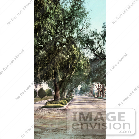 #40729 Stock Photo Of Trees Along Marengo Avenue In Pasadena, California by JVPD