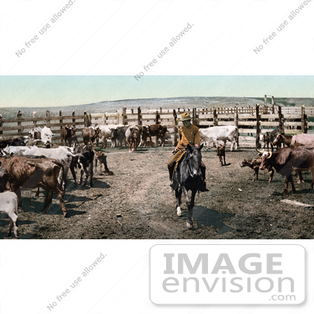 #40931 Stock Photo Of a Cowboy On Horseback, Rounding Up The Cattle In A Corral On A Farm In Colorado by JVPD