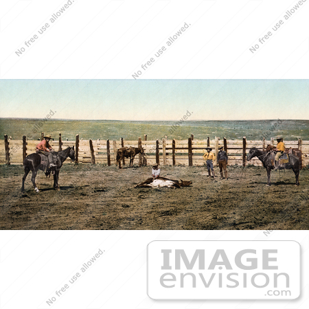 #40936 Stock Photo Of A Farmer And Cowboys Roping A Cow In A Corral On A Colorado Farm by JVPD