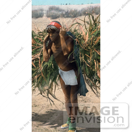 #40942 Stock Photo Of A Hopi Man Bringing In The Harvest, Carrying Barley On His Back, Arizona by JVPD