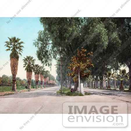 #40953 Stock Photo Of Palm Trees Lining Magnolia Avenue In Riverside, California by JVPD