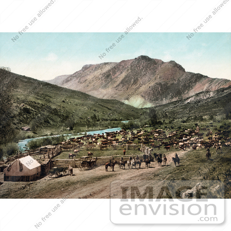 #41031 Stock Photo Of Cowboys Rounding Up Cattle Along The Cimarron River, Colorado by JVPD