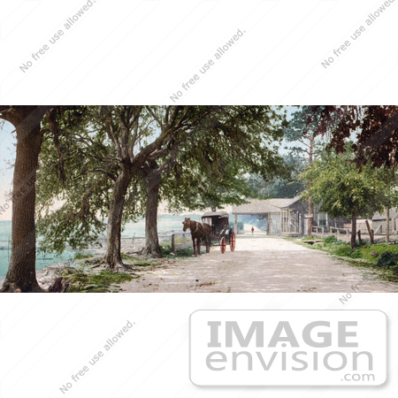 #41068 Stock Photo Of A Horse Pulling A Carriage On Bay Shell Road In Mobile, Alabama by JVPD
