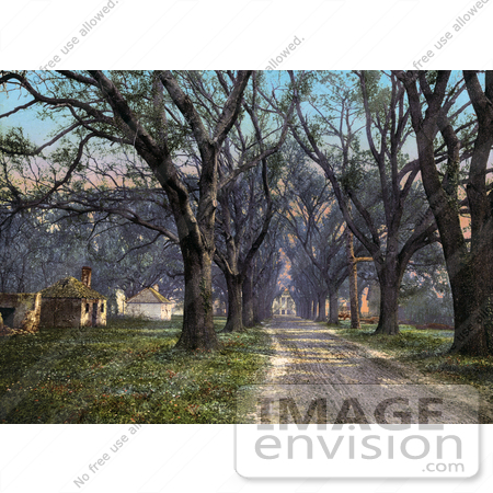 #41124 Stock Photo Of A Tree Lined Dirt Road Through The Hermitage In Savannah, Georgia by JVPD