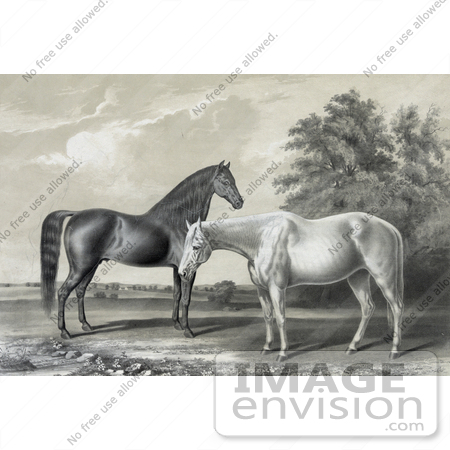 #41287 Stock Illustration of Two Beautiful Horses, Black Hawk And Lady Suffolk, Standing Together by JVPD