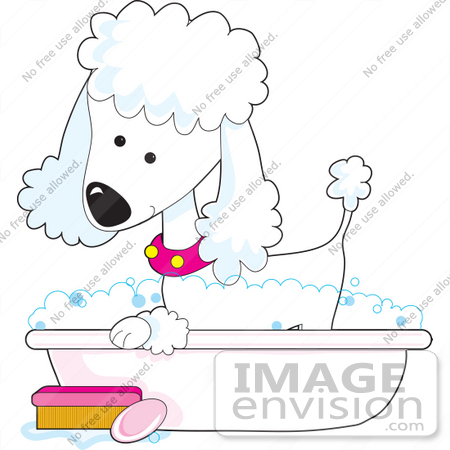 #41629 Clip Art Graphic of a Bathing White Poodle in a Tub by Maria Bell
