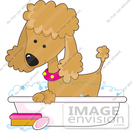 #41631 Clip Art Graphic of a Bathing Apricot Poodle in a Tub by Maria Bell