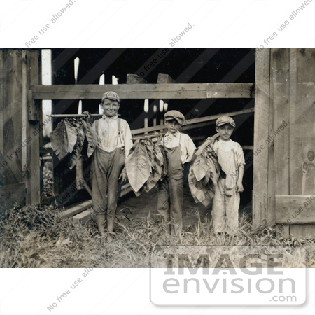 #42334 Stock Photo of Three Leaf Boys Carrying Tobacco Leaves While Working On A Farm In 1917 by JVPD