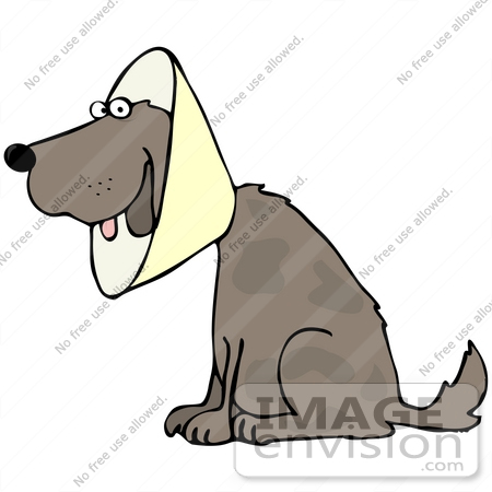 #42342 Clip Art Graphic Of a Recovering Dog Wearing A Collar Cone by DJArt