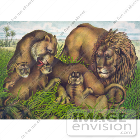 #43221 RF Illustration Of A Family Of Lions, The Mother Grooming Her Cubs by JVPD