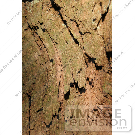 #446 Image of the Bark of a Redwood Tree by Jamie Voetsch