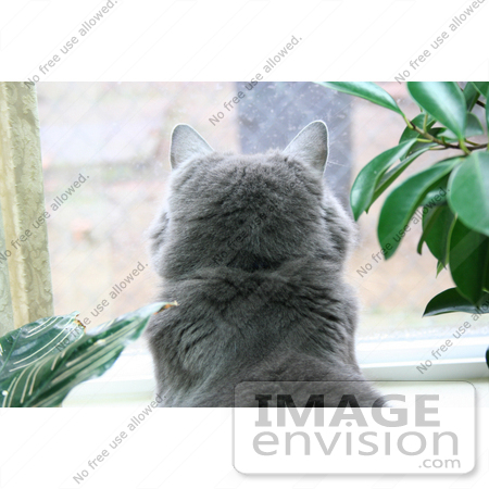 #449 Photograph of a Cat in a Window by Jamie Voetsch