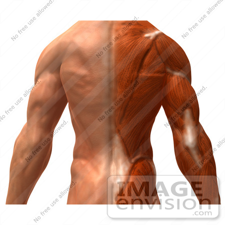 Royalty Free Rf Illustration Of A 3d Closeup Of A Muscle Male Body