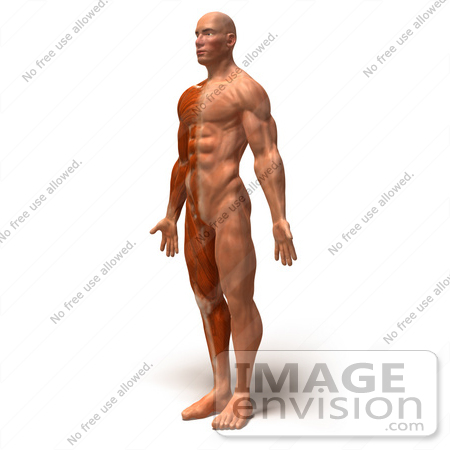 Royalty Free Rf Illustration Of A 3d Muscle Male Body Facing Left