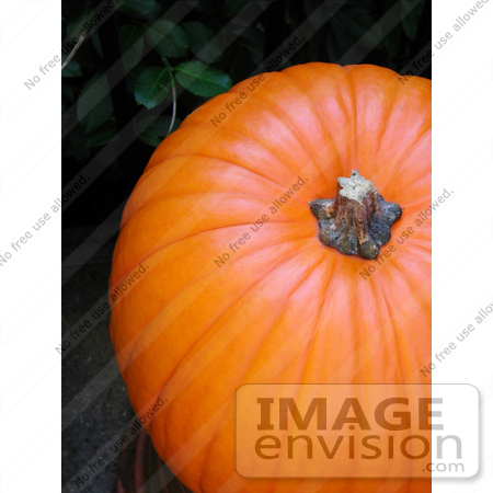 #53699 Royalty-Free Stock Photo of Pumkin Close-Up by Maria Bell