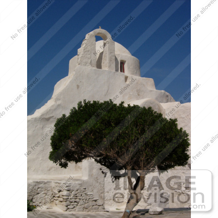 #53887 Royalty-Free Stock Photo of an olive tree by a church by Maria Bell