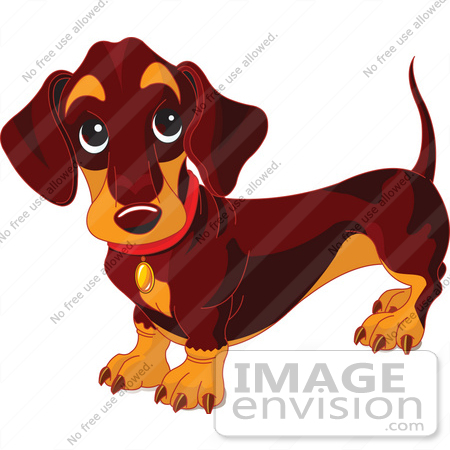 #56241 Royalty-Free (RF) Clip Art Of A Dark Weiner Dog Standing And Looking Up by pushkin