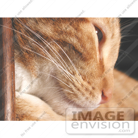 #60 Pet Picture of a Cat Leaning Against Wood by Kenny Adams