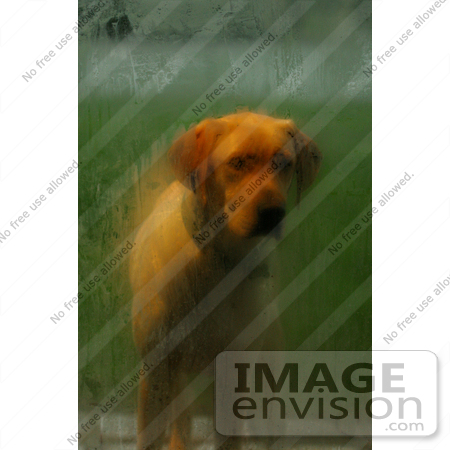 #600 Picture of a Doggy Standing and Waiting at the Door by Kenny Adams
