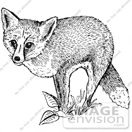 Letter F is for Fox coloring page  Free Printable