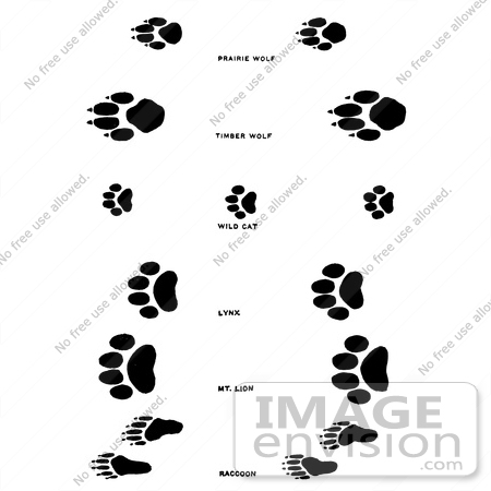 clipart of wolf wildcat and raccoon tracks in black and white rh imageenvision com High School Wildcat Mascot Logos Kentucky Wildcats Clip Art