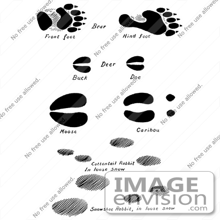 #61661 Clipart Of Bear Deer Moose Caribou And Rabbit Tracks In Black And White - Royalty Free Vector Illustration by JVPD