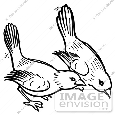 #61913 Clipart Of Birds Pecking The Ground In Black And White - Royalty Free Vector Illustration by JVPD