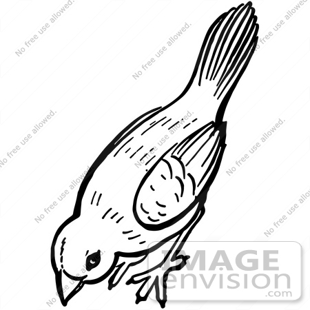 Clipart Of A Bird Pecking The Ground In Black And White - Royalty ...