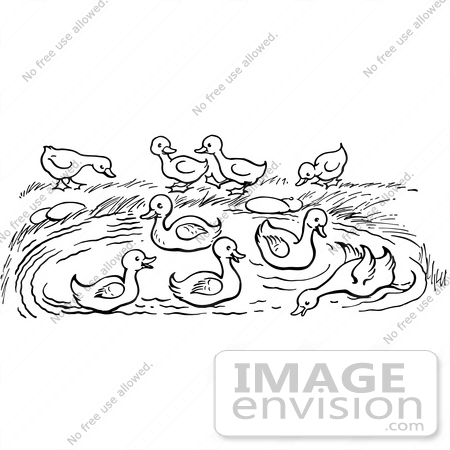 #61927 Clipart Of A Pond With Ducks In Black And White - Royalty Free Vector Illustration by JVPD