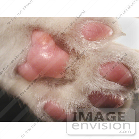 #66 Picture of a Cat Paw by Kenny Adams