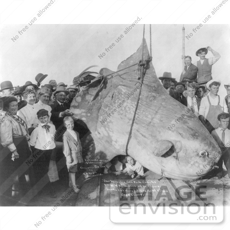 #6844 Black and White Stock Photo of People Standing by a Caught 3500 lb Sun Fish by JVPD