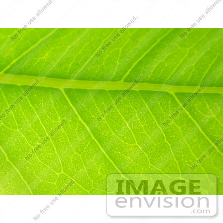 #82 Closeup Picture of a Green Leaf by Kenny Adams
