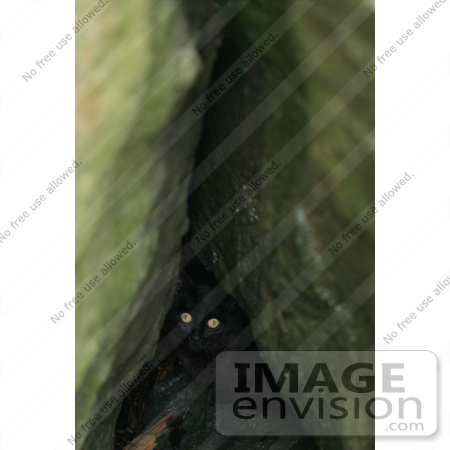 #830 Photography of Black Cat Hiding in Jetty Rocks by Kenny Adams