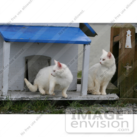 #831 Photography of Focused Feral Cats by Kenny Adams