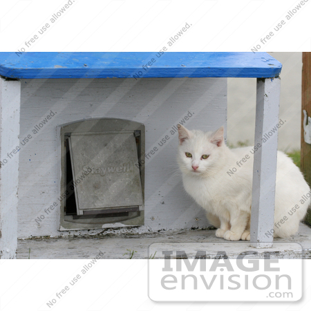 #842 Photo of a White Feral Cat Sitting Beside a Cat Door by Kenny Adams
