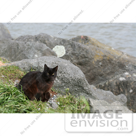 #845 Photography of Brownish Black Feral Cat at an Ocean Jetty by Kenny Adams