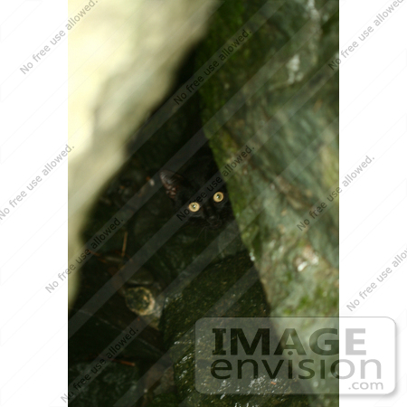 #851 Photography of a Black Cat Hiding Behind Rocks by Kenny Adams