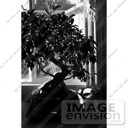 #941 Black and White Picture of a Cat Sleeping Beside a Plant by Kenny Adams
