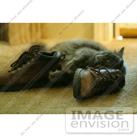 #943 Picture of Cat Rubbing Against Boots by Kenny Adams