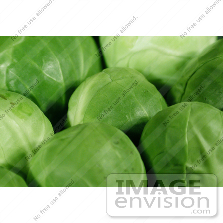 #99 Picture of Fresh Brussels Sprouts by Kenny Adams