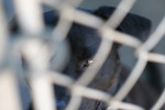 Free Picture of Caged Dog