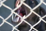 Free Picture of Caged Dog Barking