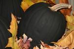 Free Picture of Black Halloween Pumpkin