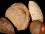 Free Picture of Brazil Nut, Walnut, Almond, and a Hazelnut