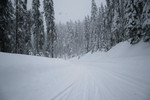 Free Picture of Snow Covered Road with Trees