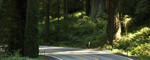 Free Picture of Country Road Through Redwoods
