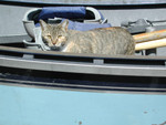 Free Picture of Cat in a Boat