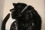 Free Picture of Sleeping Tuxedo Cat